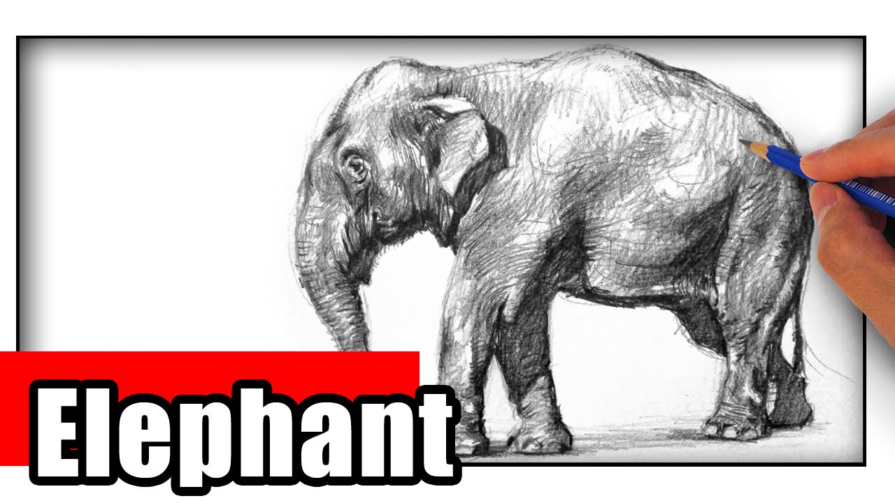 How To Draw An Elephant The Easy Way Youtube