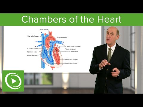 Chambers of the Heart – Cardiology | Medical Education Videos