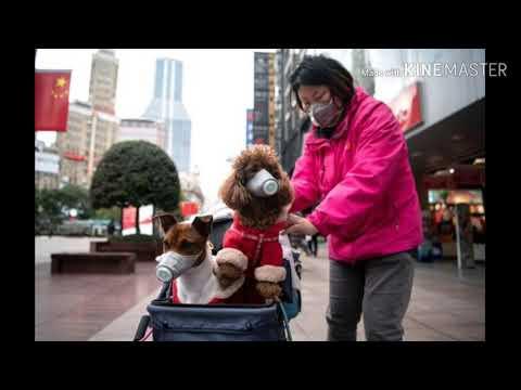 Hong Kong Detected Corona Virus On Pet Dogs.