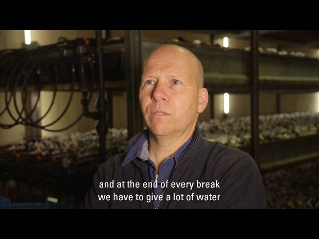 Drip Irrigation for Mushrooms in the Netherlands: Netafim Customer Testimonial