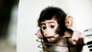эти смешные животные#2 (фото)