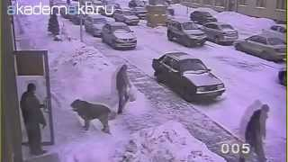 Нападение безхозной собаки на женщину