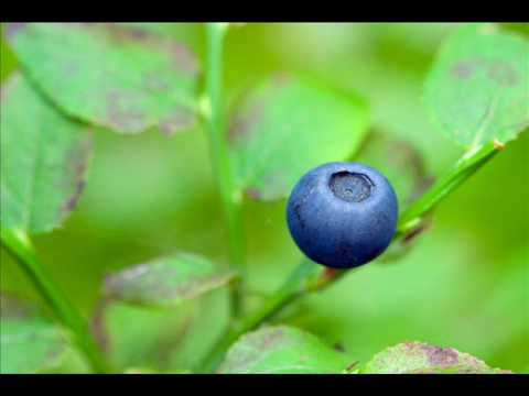 Ganja White Night - Blueberry