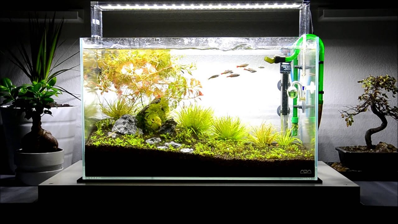 Aqua design amano ada 60 p project october update new for Ada fish tank