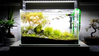 Aqua Design Amano Ada 60 P Project - October Update New Fish And Plants Addition!