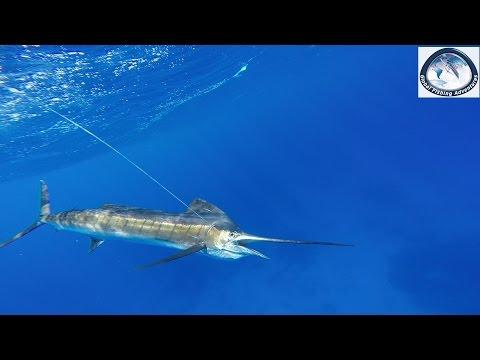 Big Game Fishing Madagaskar
