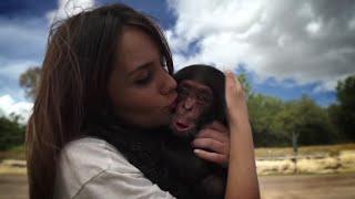 El chimpancé que robó el corazón de Dulce María en Africam Safari