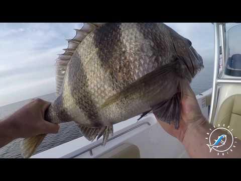 Biloxi Inshore Fishing...PB Sheepshead! (GIANT)