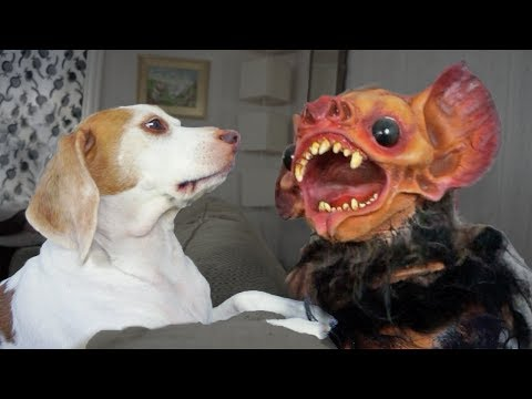 Zombie Bat Attacks Cute Dog Maymo!