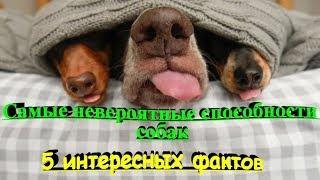 САМЫЕ НЕВЕРОЯТНЫЕ СПОСОБНОСТИ СОБАК  5 ИНТЕРЕСНЫХ ФАКТОВ  THE MOST INCREDIBLE ABILITIES OF DOGS
