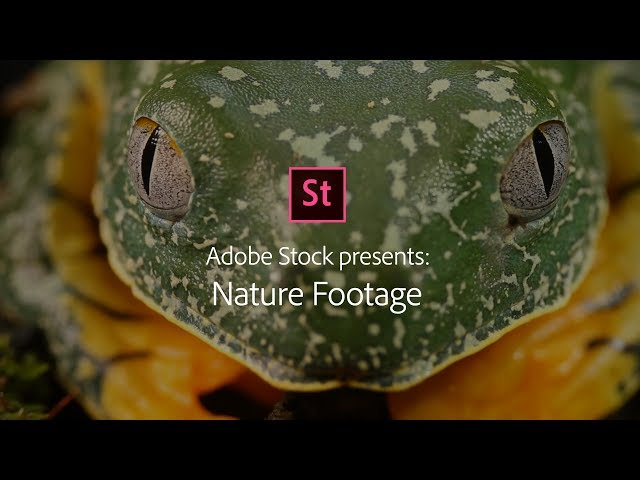 Nature at its best! Stock Footage from Adobe Stock | Adobe Creative Cloud