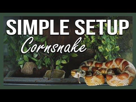 SIMPLE SETUP: CORNSNAKE