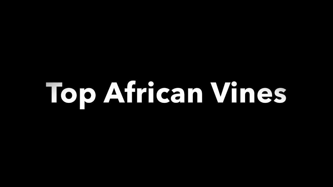 Top African Vines   Funny Moments