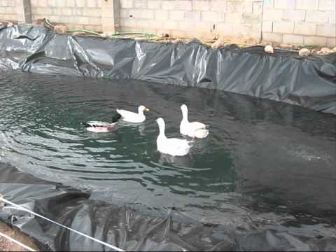 Duck pond project proyecto estanque de patos youtube for Como hacer un lago artificial