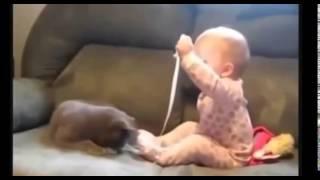 Смешное Видео! Кошки и Дети! Подборка 2014 NEW