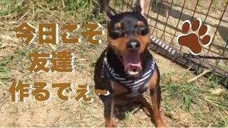 今回はなぁ、奈良のドッグランや! 会員制で常連さんが多い イメージや...