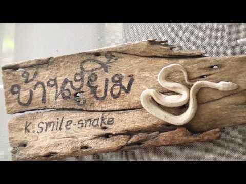รายการ Zoo Thailand ตอน ความน่ารักของอสรพิษ [23.04.60]