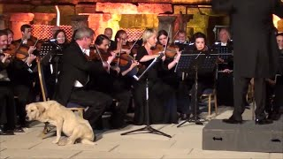Video: Dog crashes orchestra performance in