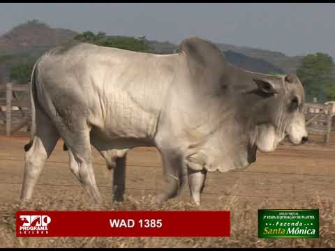 LOTE 28 - WAD 1385