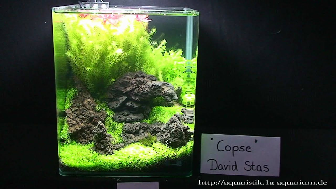 Nano Aquascapes 2010 Hannover Part 2 - YouTube
