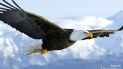 Pictures of Eagles!