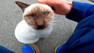駐車場で車から降りたら野良猫がいたのでナデナデしたら他の猫も集まってきた