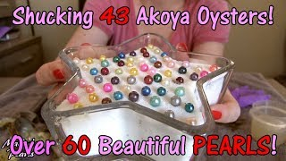 The NEW Biggest Akoya Oyster Shuck EVER! 43 Oysters + Triplets + Quads + 60 PEARLS! WOW! Pearl Party