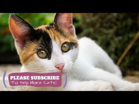 Sleeping Music for Kittens, Cat Sleep Music, 1 Hours Music  Make Cats Go to Sleep ☯LCZ74