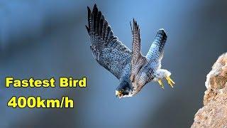 दुनिया का सबसे तेज उड़ने वाला 10 पक्षी | Top 10 Fastest Birds In The World | FASTEST ANIMALS
