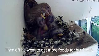 Sleep. Eat. Poop - Repeat: House Finch 🐦 05.10.17