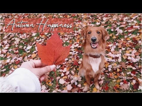 Vlogtober Day 16 // Autumn Happiness + DIY Projects
