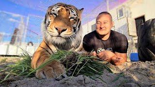 Засыпали вольеры Тигров Песком