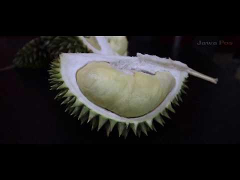 Jawa Pos Belah Durian Episode 44: Durian Bungkik Lumajang