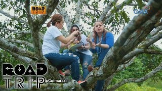 Road Trip: Sheryl, Manilyn, and Tina's mango picking in Guimaras