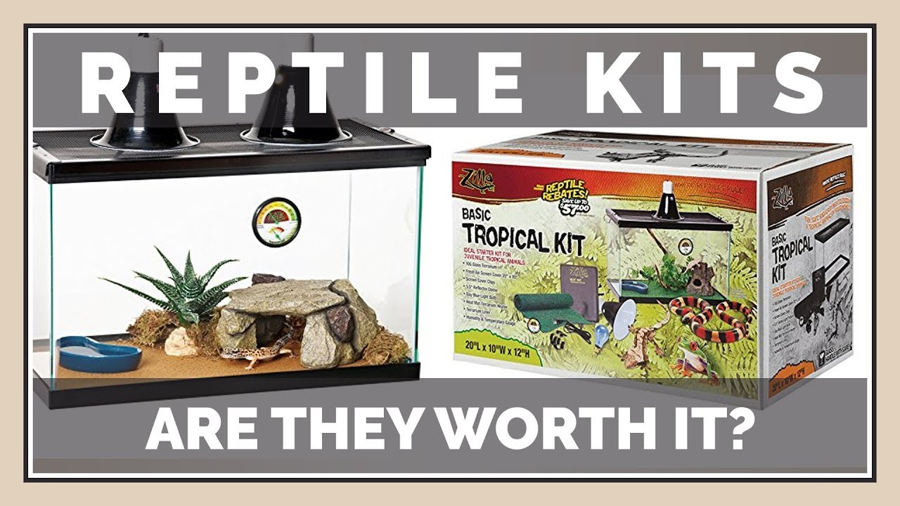 Should You Buy Reptile Starter Kits Are They Worth The Money Youtube