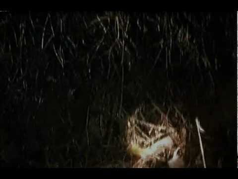 The Blair Witch Project Scene Children In The Woods