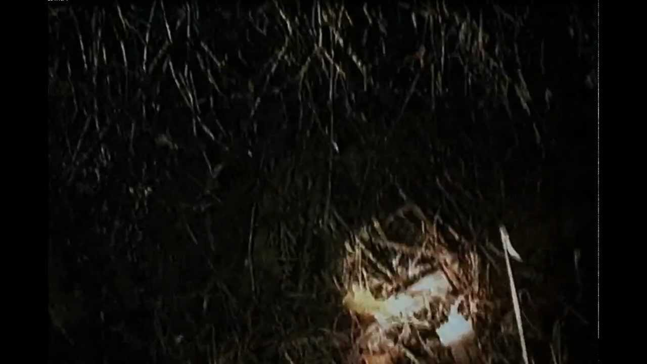 blair witch project full movie Top critic perhaps for someone who never saw the blair witch project, this might represent an adequate scary movie september 16, 2016 | rating: 2/4 | full review james berardinelli reelviews top critic blair witch nods to the first film but never rediscovers its power september 16, 2016 | rating.