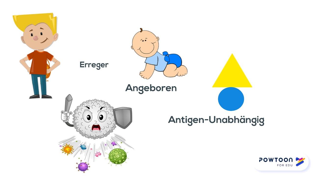 Was ist humorale und zelluläre immunantwort