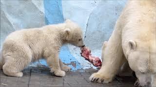 Ужин у белых мишек 29.04.19
