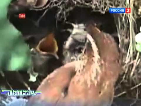 stringah-goryachie-shvedki-video