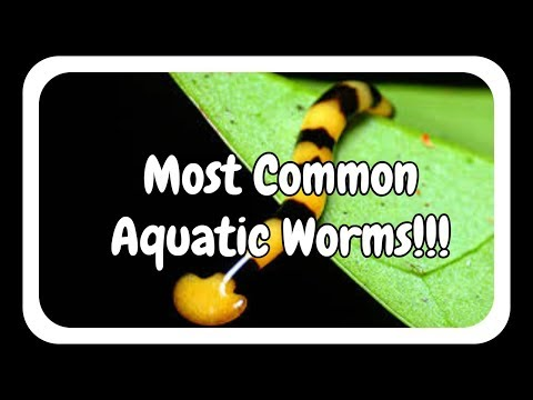 Most Common Aquatic Worms In Aquariums