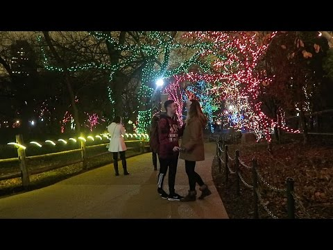 Lincoln Park Zoo Lights!