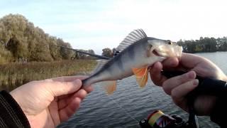 Рыбалка на районе Ловля окуня на ультралайт от Spinning Travel осенью