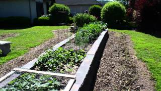 Successful Raised Bed Garden - Cement Block Construction