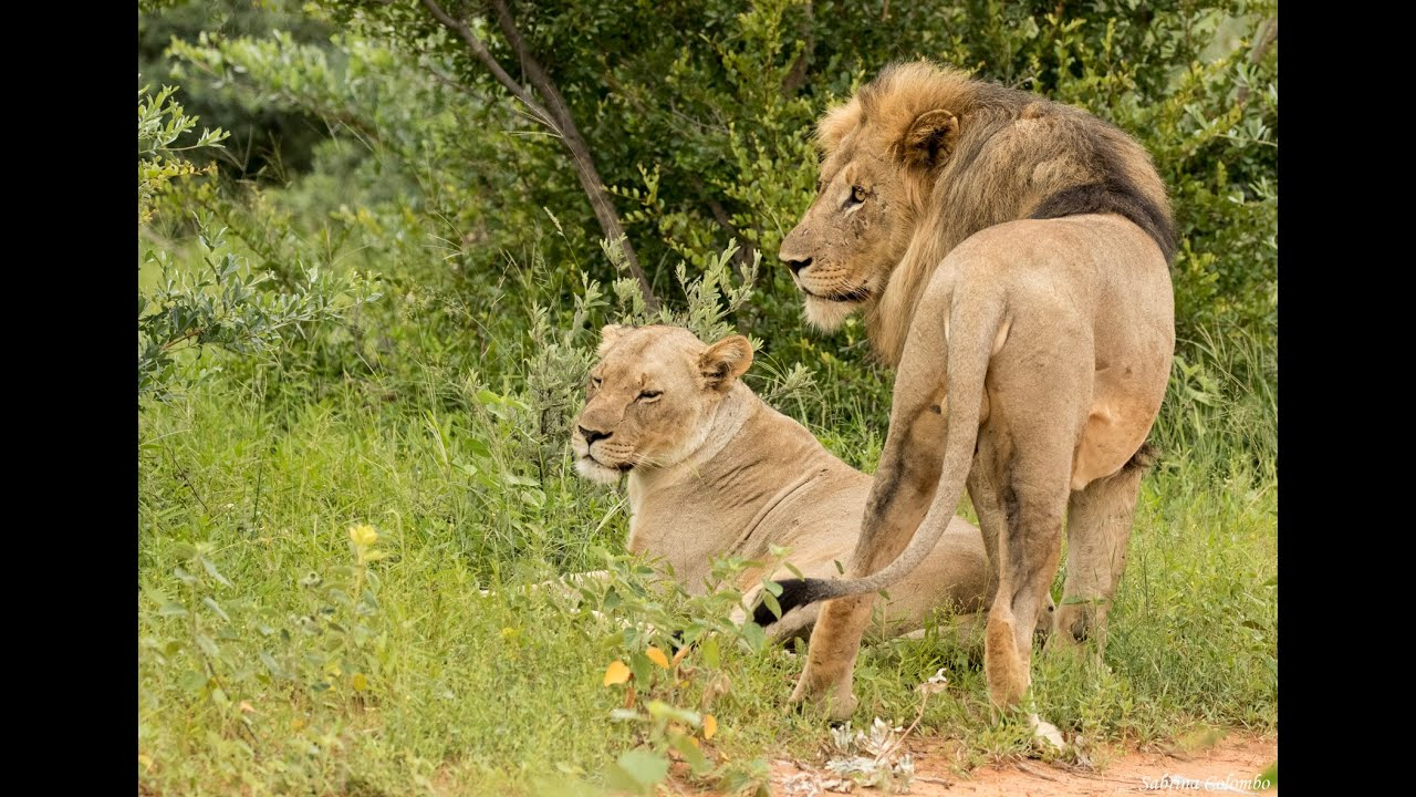 "Discover the Beautiful African Wildlife and learn about Conservation with the LEO ""QuaranTeam""!"