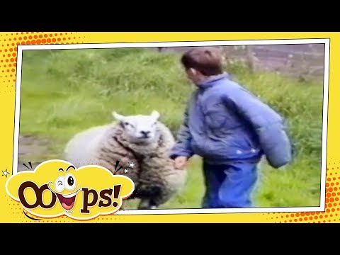 FUNNY VIDEOS 2017 Compilation