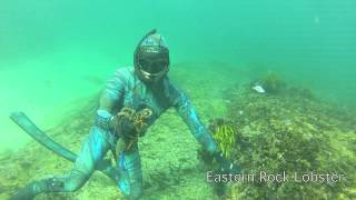 Central Coast Spearfishing - Vol 7