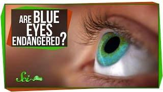 Are Blue Eyes Endangered?