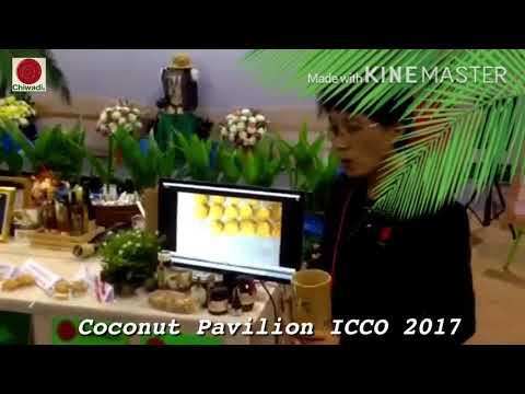 Hand Harvesting of Coconut Nectar