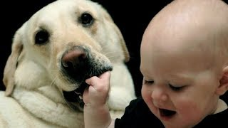 DOGS with lot's of patience! - KIDS & BABIES ANNOYING DOGS - Funniest you'll see today!